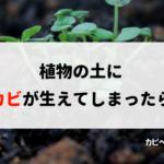 植物の土に生えるカビを除去し、予防する方法