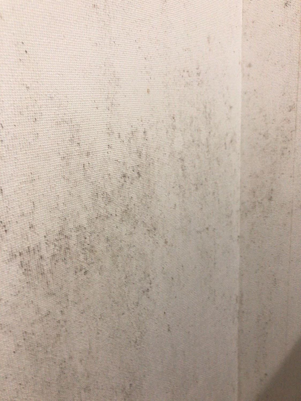 壁に生えたカビを業者を呼ばずに自力で除去するには カビペディア