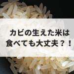 カビの生えた米は食べても大丈夫?!